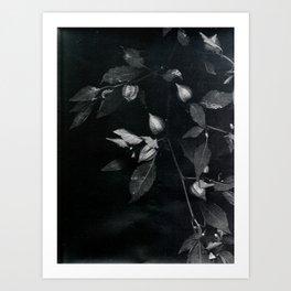redemption jungle Art Print