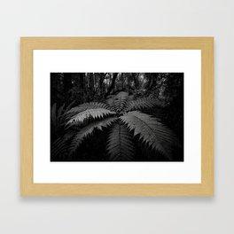 Fern in the Forest, New Zealand Framed Art Print