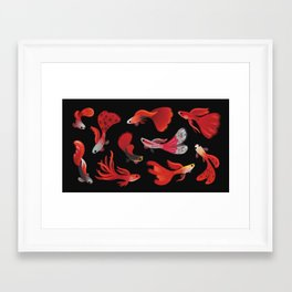 Red guppy Framed Art Print