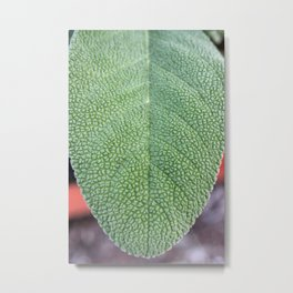 A Sage Leaf Metal Print