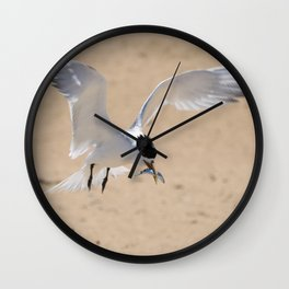 Crested Tern Hovering Wall Clock