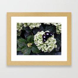 Black Butterfy Framed Art Print