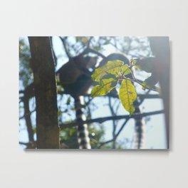 Lemurs Metal Print