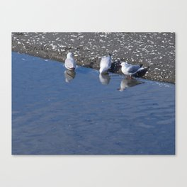 Seagulls At The Foreshore Canvas Print