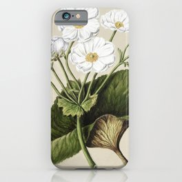 Antique plant The mountain lily drawn by Sarah Featon (1848-1927) iPhone Case