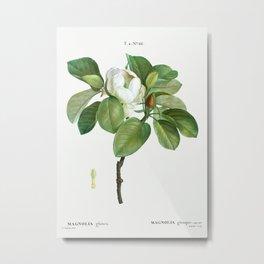 Magnolia (magnolia glauca) from Traité des Arbres et Arbustes que l'on cultive en France en pleine t Metal Print