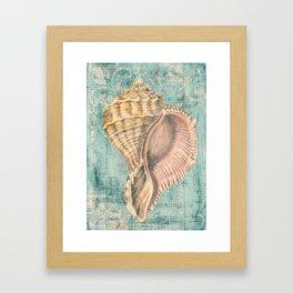 Shabby Shell2 Framed Art Print