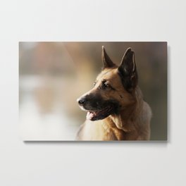 German Shepherd enjoys the Indian Summer Metal Print