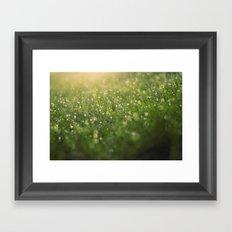 Dew on a Sunday Morning Framed Art Print