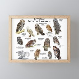 Owls of North America Framed Mini Art Print