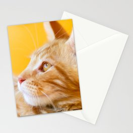 Red-white tabby Maine Coon cat Stationery Cards