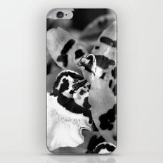Leopard Orchid black and white iPhone & iPod Skin