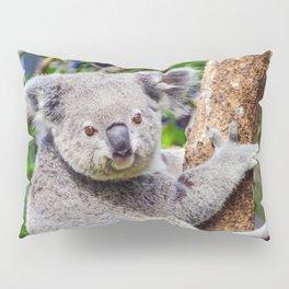 Australian Koala Bear Photo Pillow Sham