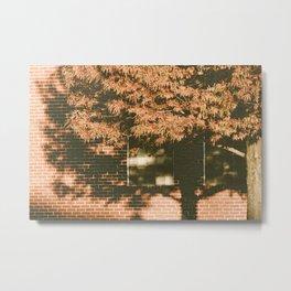 autumn tree, shadow Metal Print