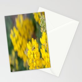 Ladybug in a Yellow Lupin, Dunedin, New Zealand Stationery Cards