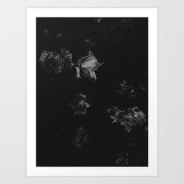 Cold Roses (I) Art Print
