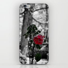 Rose in the snow iPhone Skin