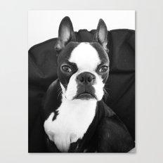 Lulo's evil look. Canvas Print