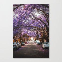 Jacaranda Canvas Print