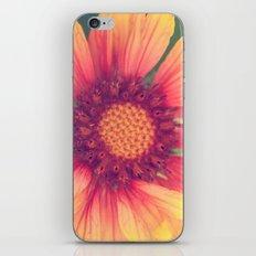 Pink and Orange iPhone & iPod Skin