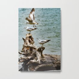 Two On - One Off Metal Print