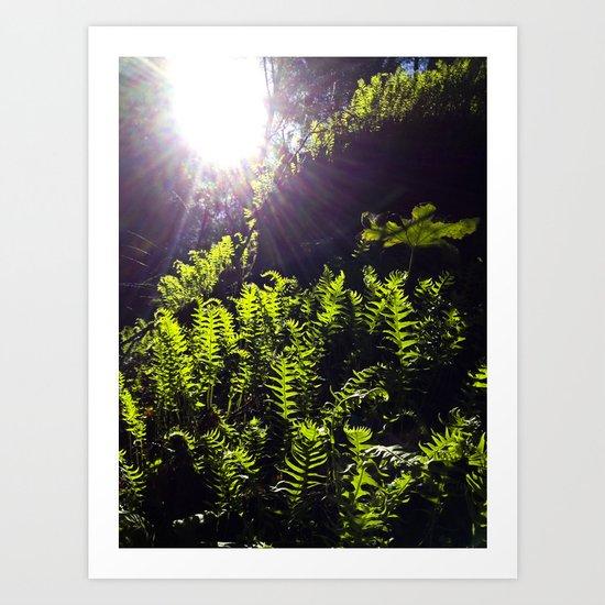 Fern Light Art Print