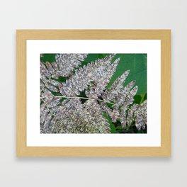 Spotted Fern Framed Art Print