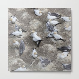 Gannet Colony Metal Print