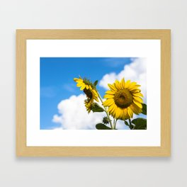 Sunflowers and clouds Framed Art Print