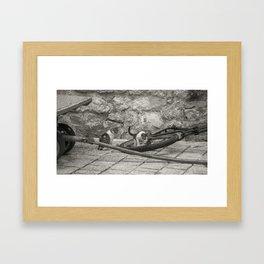 Cats Kotor Framed Art Print