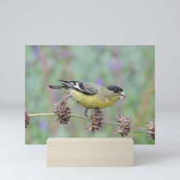 Lesser Goldfinch Snacks on Seeds Mini Art Print