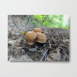 Roadside Metal Print