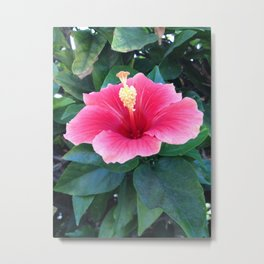 The Hibiscus Among Us Metal Print