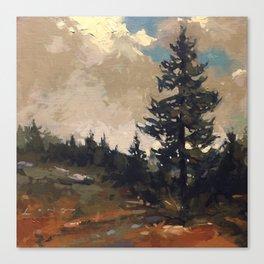 Lone Spruce Canvas Print