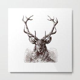Mature Antlers Metal Print
