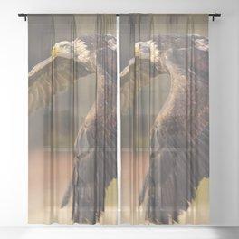 Bald Eagle in Flight Sheer Curtain