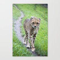jaguar Canvas Prints featuring Jaguar by Veronika