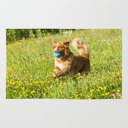 Nova Scotia Duck Tolling Retriever Dog Rug