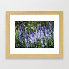 Lupins in Blue and Purple Framed Art Print