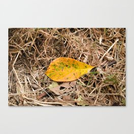 Yellow leaf on the ground Canvas Print