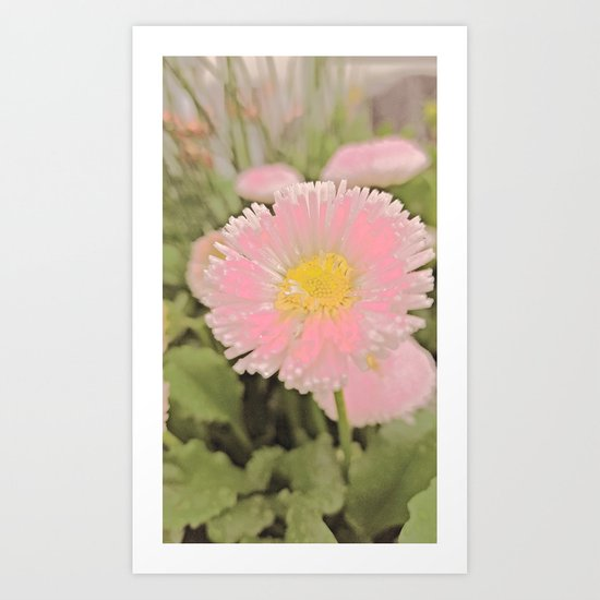 The Singular Beauty Of A Daisy Art Print