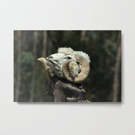 Sheep Head on a Stick Metal Print