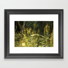 Mountain Meadows 01 Framed Art Print