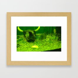 acvarium - green Framed Art Print