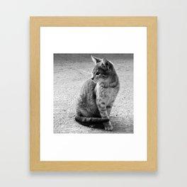 Lloyd- Black and White Cat Photography Framed Art Print