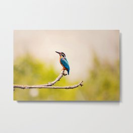 Kingfisher on the Branch Metal Print
