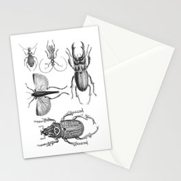 Vintage Beetle black and white drawing Stationery Cards