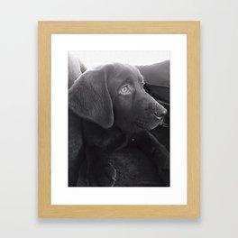 Labrador Puppy Portrait Framed Art Print