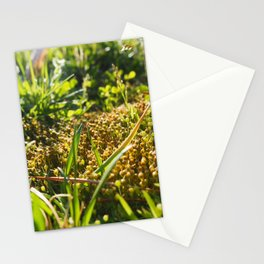 Sun, Grass and Funky Moss Stationery Cards
