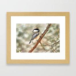 Clinging Chickadee Framed Art Print